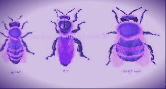 des-abeilles.jpg