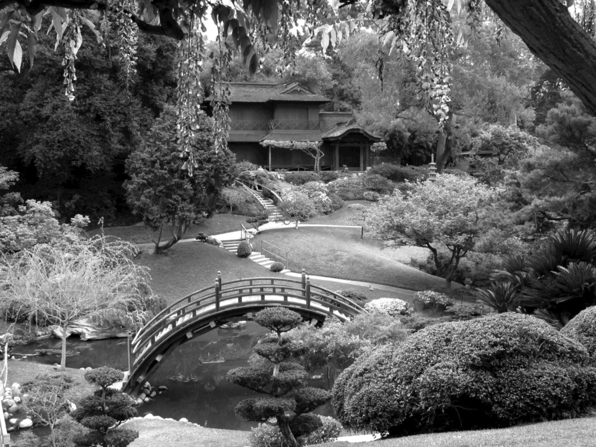 le-jardin-japonais.jpg